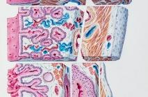 La vagina