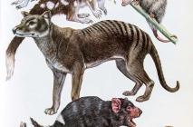 Marsupiali
