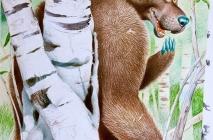 La caccia all'orso