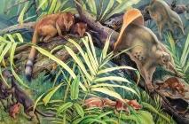 Primati del Paleocene