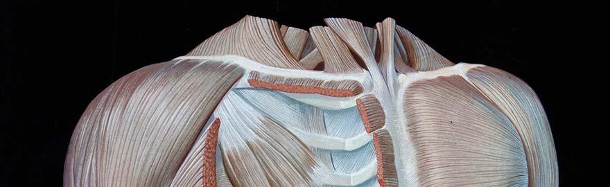top-anatomia